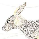 Kangaroo-poster-head